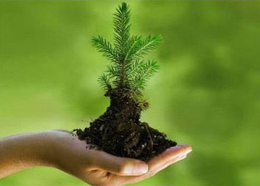 environment_plant